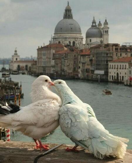 عکس عاشقانه دونفره برای پروفایل