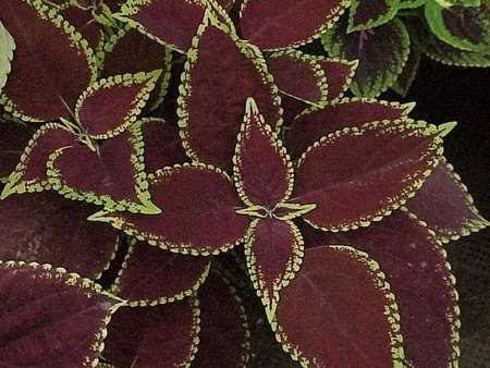 اسپری براق کننده گل مصنوعی