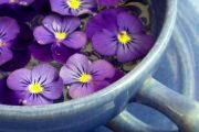 خواص گل بنفشه برای پوست و بدن